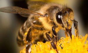 3 Tips om bijen te helpen.