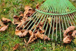 Tuin winterklaar maken, wat  wel en niet?
