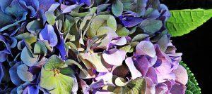 10 tips bij het maken van een beplantingsplan