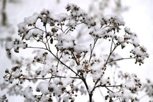 winter mooie plant