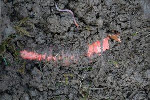 regenworm bodemleven compost mest