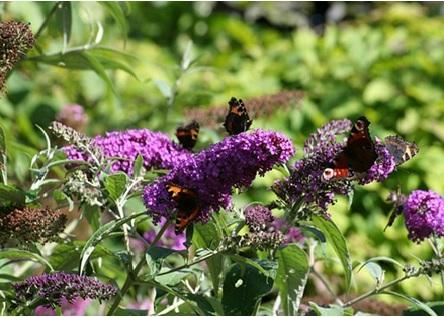 Vlinders in de tuin, hoe doe je dat?
