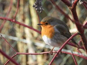 Vogels in de tuin in de winter