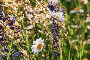 Onderhoudsvrije tuin met een bloemenweide